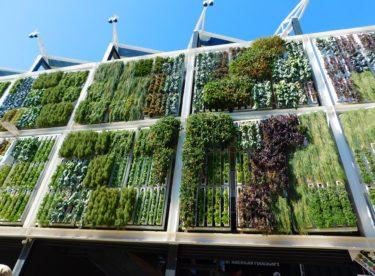 Jak na vertikální zahrady: Pěstování v plechovkách, PET lahvích nebo okapech