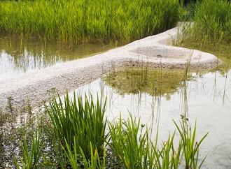 Domácí kořenové čističky: levné a ekologické čistění odpadních vod