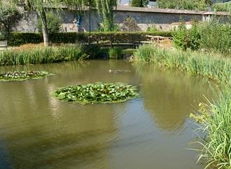 Biotop – bazén s kapkou přírody