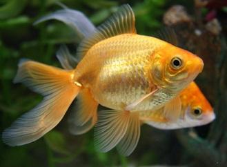 Nahoře kytičky, dole rybičky: Seznamte se s domácí akvaponií