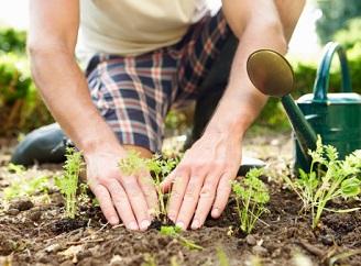 Sdílení přináší radost: Komunitní zahrady představují nový fenomén českých měst