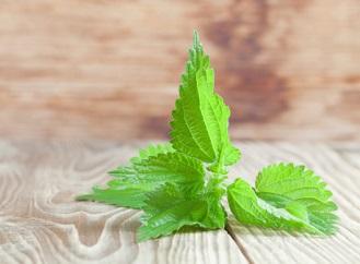 Jarní detoxikační výzva: Kopřivové smoothie a další zelená inspirace