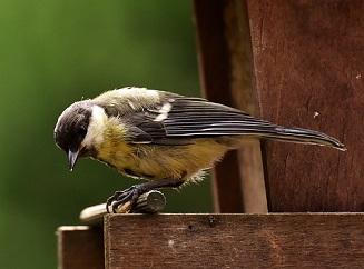 V druhé půli zimy vás ptactvo potřebuje. Čím ptáky krmit?