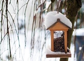 Než vás zaskočí déšť a sníh – 4 užitečné tipy pro zazimování zahrady