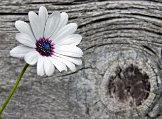 Proč dřevo v exteriéru pozvolna a krásně šediví?