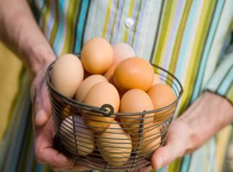 Domácí vejce, bio nebo z klece? Jak poznat rozdíl