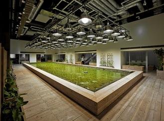 Jak může vypadat zemědělství ve městech? Hydroponie a LED osvětlení v kancelářské budově
