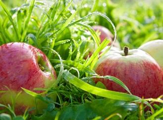 Podzimní tipy pro přírodní zahradu