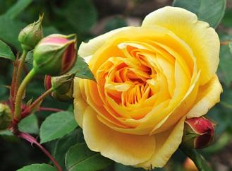 Podzim v zahradě: Správný moment pro výsadbu cibulovin, růží a stromů