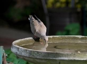 Pozvěte na zahradu opeřené přátele: Co nesmí chybět?