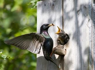 Ptačí budky, umělá hnízda, křoviny – jak přilákat ptactvo na zahradu