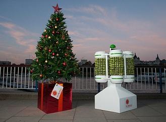 Všestranná zelenina: Růžičková kapusta může napájet vánoční osvětlení