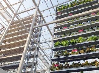 Vertikální farmaření – lék na budoucí potravinové krize?