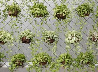5 tipů pro vertikální zahrady: Pěstování v plechovkách, PET lahvích nebo okapech