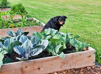 Co na jaře postavit na zahradě? Zkuste vyvýšený záhon z palet