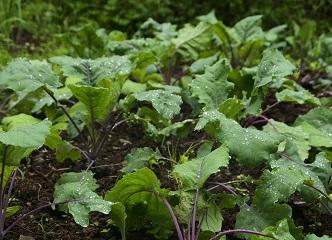 Duben v zahradě: Zakládejte trávník, vysévejte zeleninu, radujte se