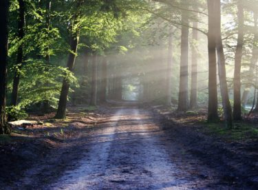Sucho posledních let decimuje lesy i v regionech, kde dříve tento problém nebyl