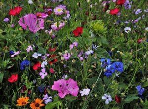 Červenec v zahradě: Zalévat, sklízet, hnojit, užívat si