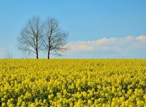 Ekologické problémy Česka: Sucho, plasty a průmyslové zemědělství
