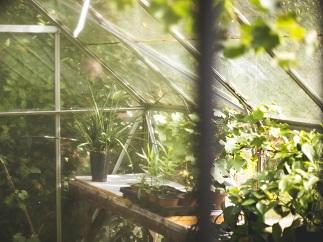 Jak si postavit skleník?