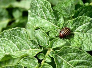 Nejčastější zahradní škůdci. Jak se jich zbavit?