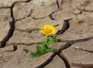 Česku hrozí katastrofální sucho. Co proti tomu můžete udělat už dnes?