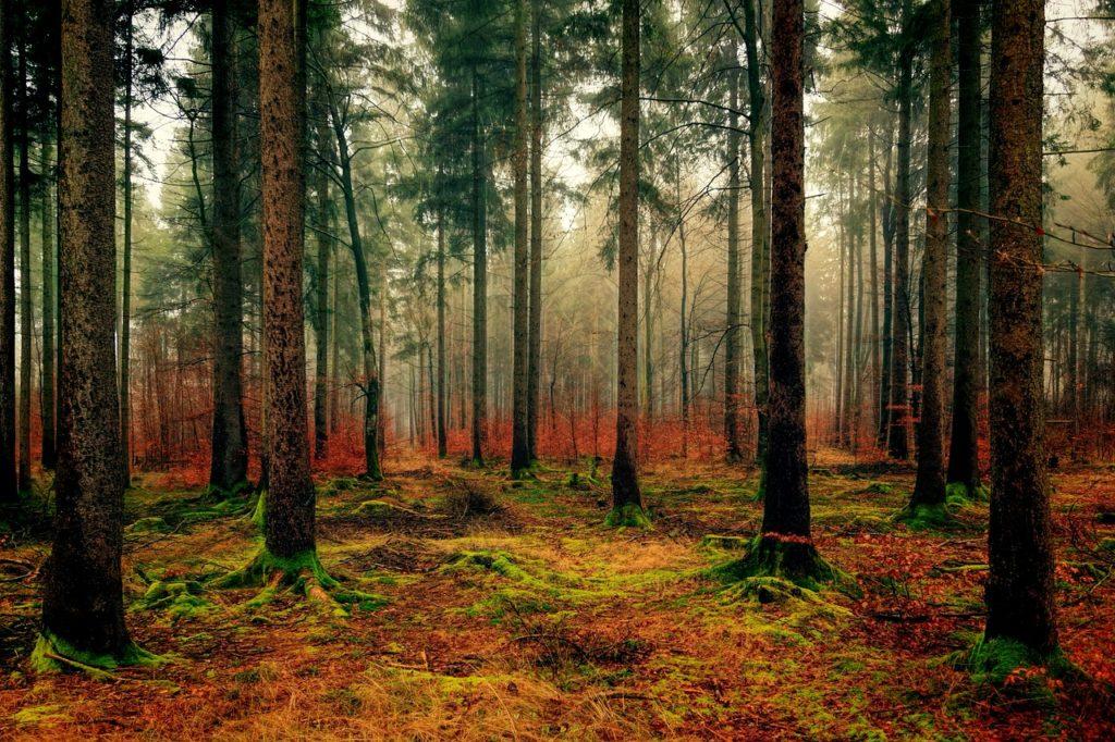 I dříve zdravé lesy na Vysočině začínají mít problém se suchem.