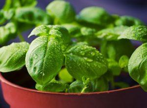 Čtyři tipy pro domácí pěstování zeleniny v truhlíku
