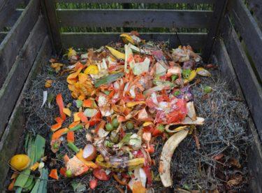 Co je to bioodpad a kam s ním – jak na třídění bioodpadu doma?