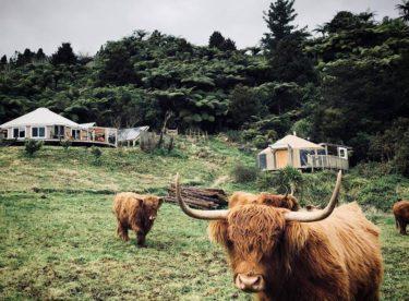 Z londýnského bytu do jurty na Novém Zélandě. Jak se tam mladé rodině žije?