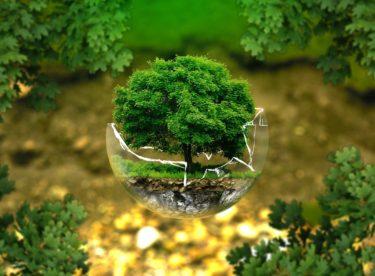 Myslíte jako podnikatelé na ekologii? Zažádejte o dotace z EU