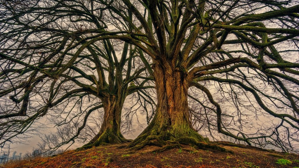 Stromy v krajině