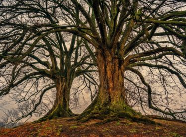 V Česku budeme sázet stromy, vysází se jich 10 milionů