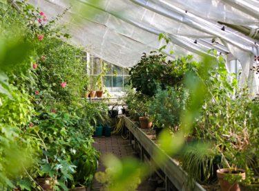 Jak si na zahradě postavit skleník?