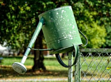 Přestože prší, sucho stále hrozí. Co proti tomu můžete udělat už dnes?