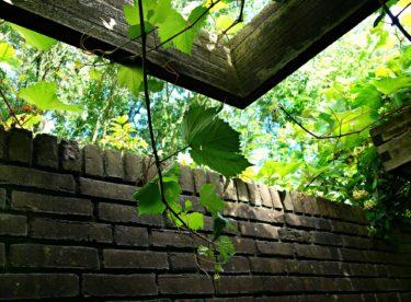 Jak zabránit letnímu přehřívání domů