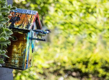 DIY z recyklovaných materiálů? Postavte ptačí budku