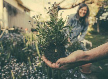 Jak pomoci přírodě? 3 tipy na eko opatření pro vaši zahrádku