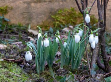 Únor v zahradě – čas na první drobné práce a množení keřů