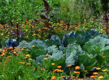 Přírodní zahrada – ideální pro línější, ale přemýšlivé zahradníky