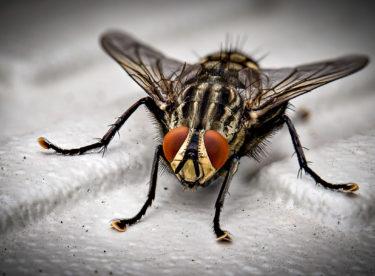 Obtěžují vás doma mouchy? Zbavte se jich!