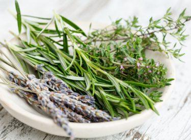 Jak sklidit a uchovávat bylinky