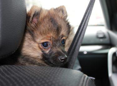 Cestování s domácím mazlíčkem snadno a pohodlně