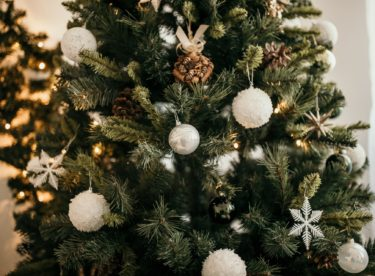 Ekologické vánoční stromky