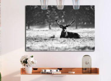 Černobílé obrazy – elegance ve vašem domově