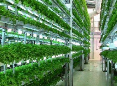 Vertikální farmy