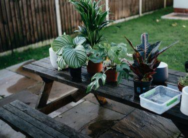 4 jednoduché způsoby, jak množit pokojové rostliny