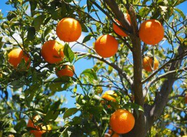 Španělské domácnosti rozsvítí pomeranče