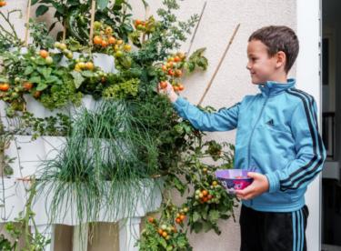 Vlastní zelenina bez zahrádky? S pěstováním vám pomůže tahle novinka!