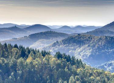 Modřín pomůže zachránit české lesy před kůrovcem